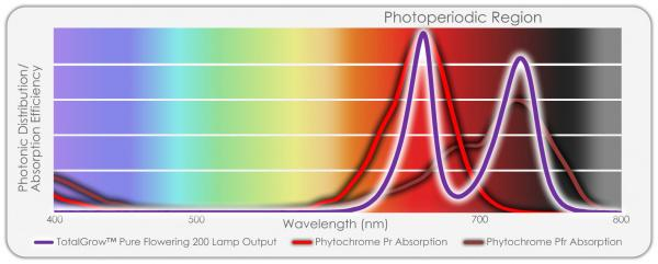Flowering Lamp Spectrum with Phytochrome